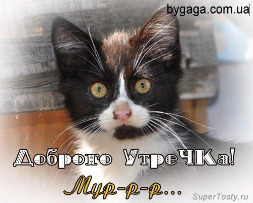 http://bygaga.com.ua/uploads/posts/1329326562_dobroe_utro_09.jpg