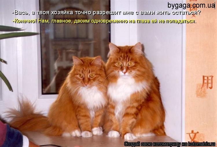 Картинки приколы с котами - be8c