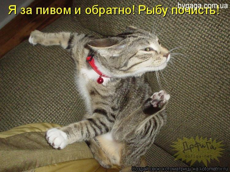 Картинки приколы с котами - f1f8