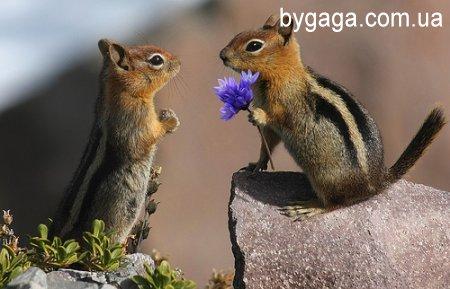 http://bygaga.com.ua/uploads/posts/1329766874_1299926387_375312.jpg