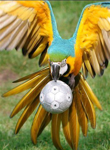 Попугай ара приколы