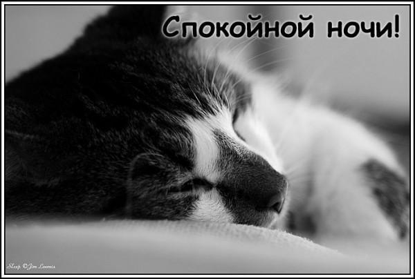 1334874093_spokoynoy_nochi_kartinki_byga