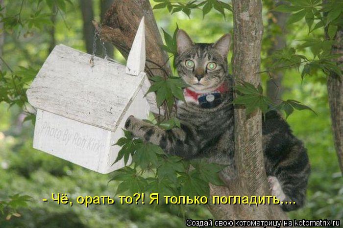 http://bygaga.com.ua/uploads/posts/1335373829_bygaga.com.ua-kotomatrix-40.jpg