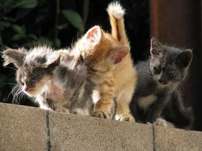 Забавные и смешные котята (42 фото)