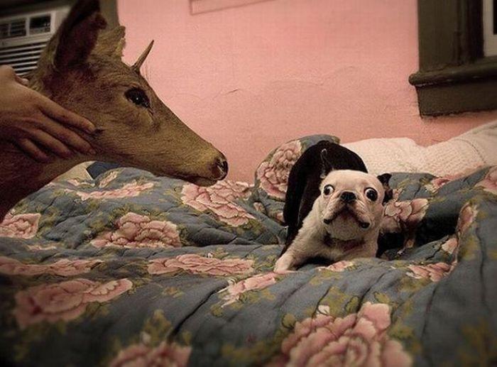 Прикольные эмоции животных 60 фото