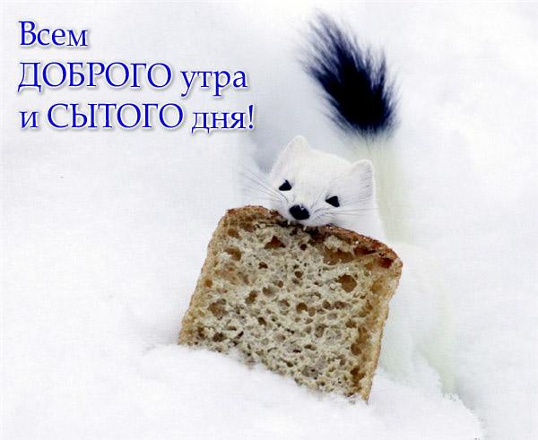 Любовь мишки картинки