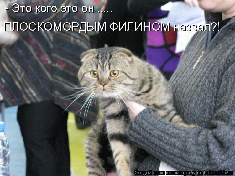 http://bygaga.com.ua/uploads/posts/1339449024_kotomatricy-1.jpg