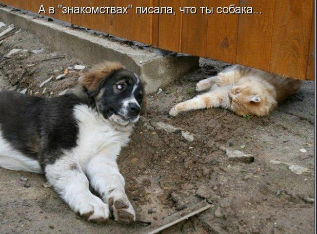 1340792667_kotomatrici_ot_bygaga.com.ua_