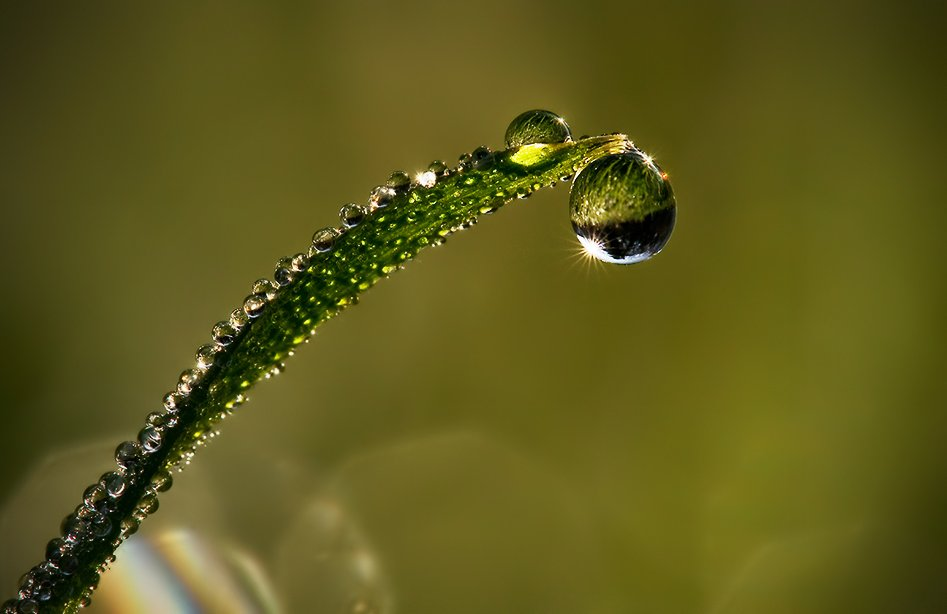 Картинки по запросу Удивительные макрофотографии капель воды