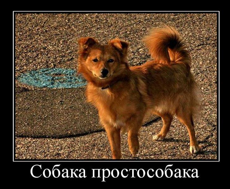 Про смешных собак