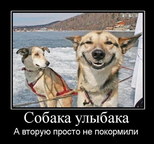 Демотиваторы про собак 34 фото