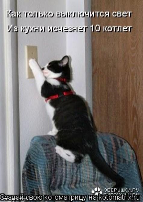 в какой комнате кошку лучше закрыть со светом или без