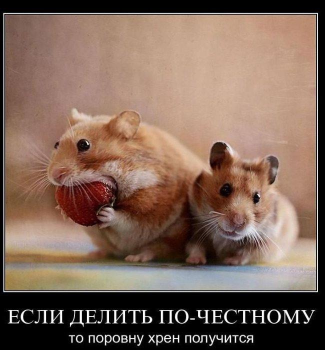 Демотиваторы про животных 33 фото