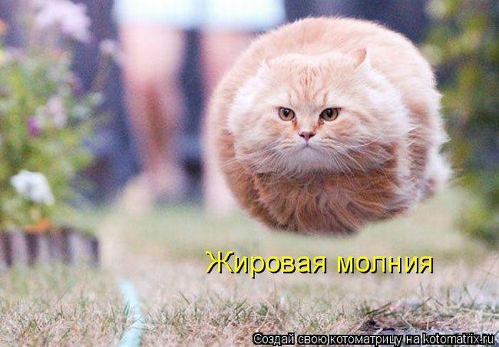 http://bygaga.com.ua/uploads/posts/1342863209_uboynie_kotomatrici_626_577-2.jpg