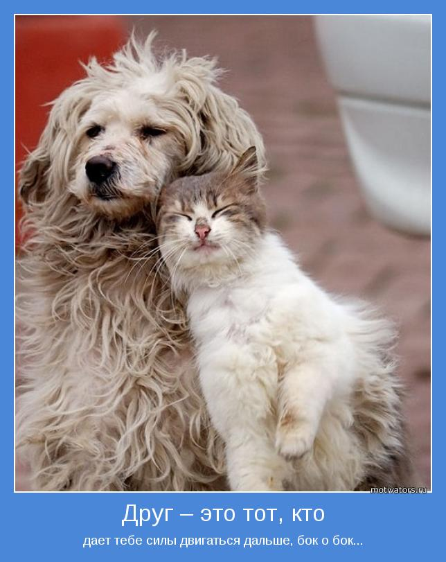 картинки про друзей и дружбу