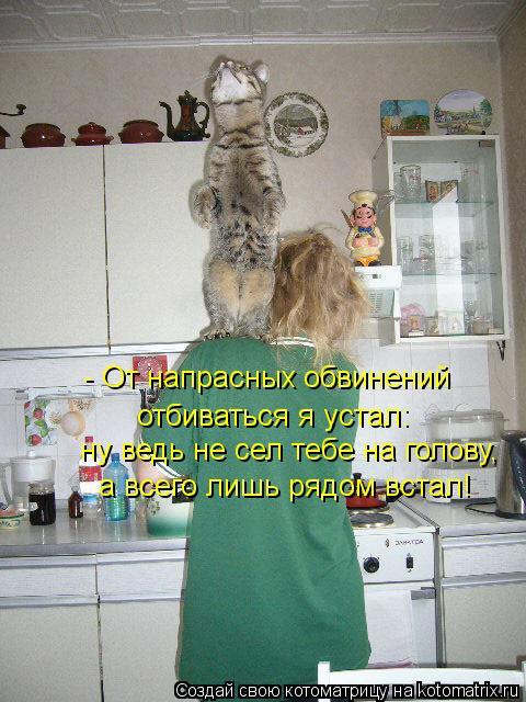http://bygaga.com.ua/uploads/posts/1346783966_veselye-novye-kotomatricy-1.jpg