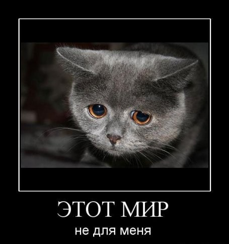 Лесная мафия - Страница 24 1347009213_smechnie_demotivatori_pro_jivotnih_527_77-64