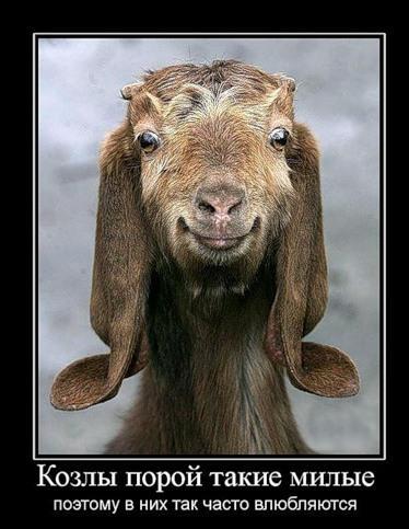 Демотиваторы про животных 60 фото