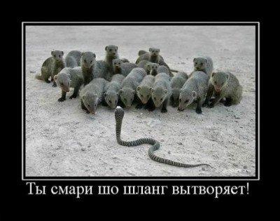 Демотиваторы о животных 51 фото