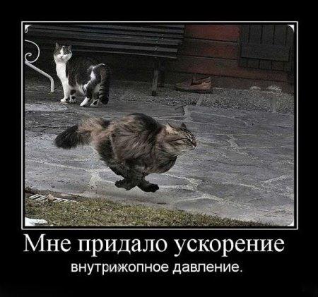 Прикольные демотиваторы с животными
