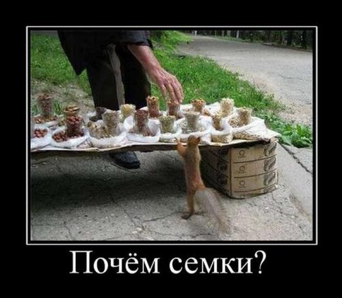 http://bygaga.com.ua/uploads/posts/1347541694_smechnie_demotivatori_pro_jivotnih_527_777-12.jpg