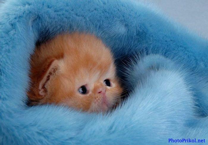 Самые милые котята в мире фото скачать бесплатно - 5e76a