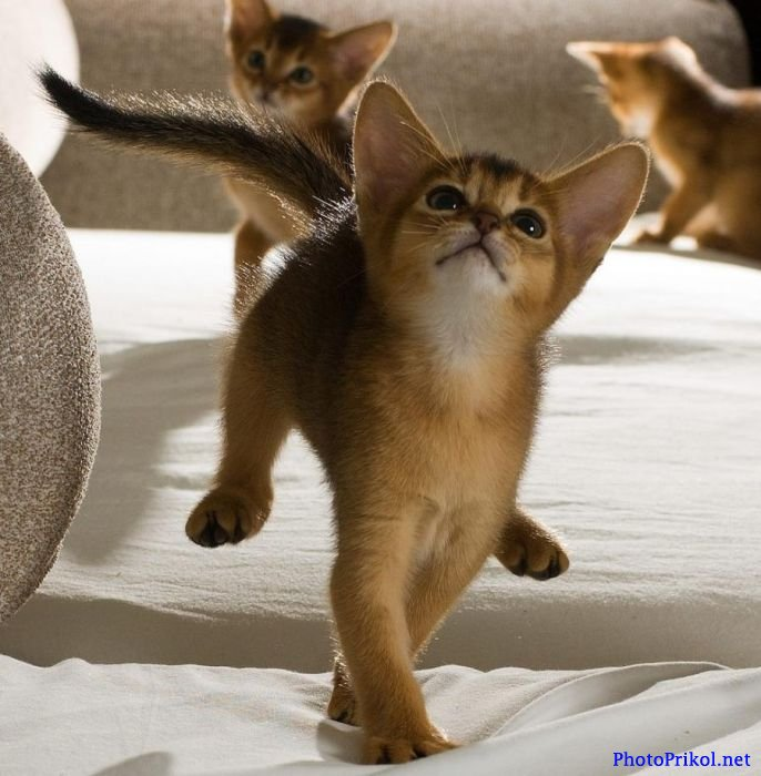 Милые и очаровательные котята 48 фото