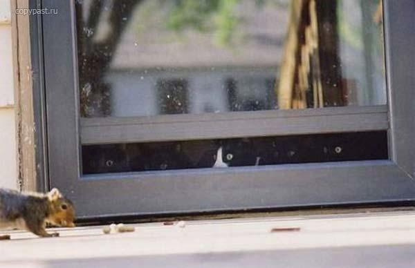 Мишки картинки (403 фото) скачать обои