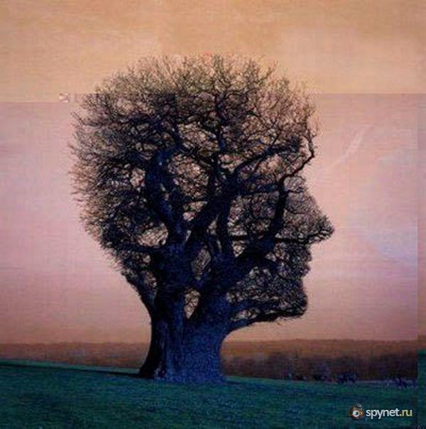 И весьма необычные деревья 48 фото