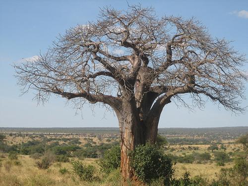 И в тоже время очень красивые деревья