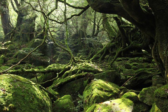 Заповедные места острова Якусима (12 фото)