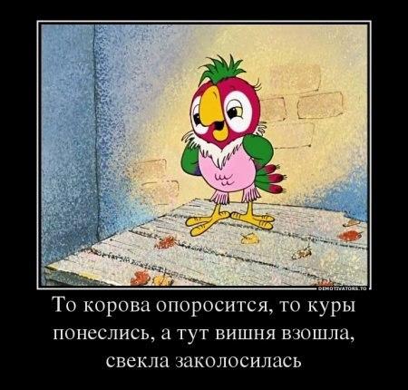 http://bygaga.com.ua/uploads/posts/1353948972_krilatie_frazi_iz_multikov_76459-3.jpg
