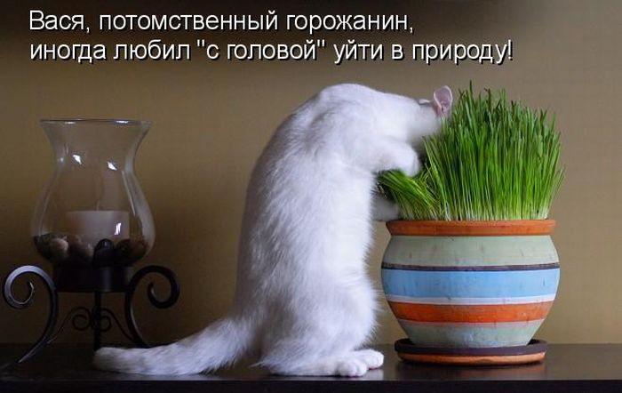 http://bygaga.com.ua/uploads/posts/1355320084_kotomatrici_prikolnie_749-7.jpg