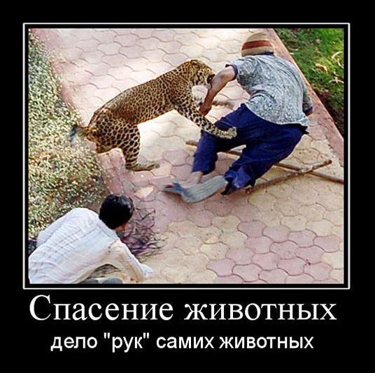 Прикольные демотиваторы про животных