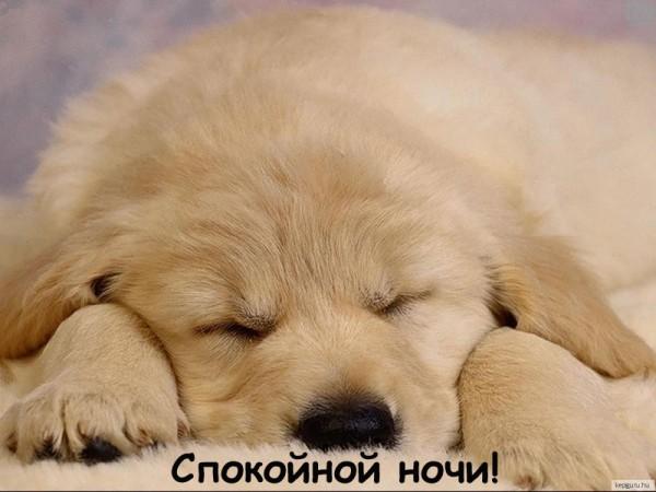 картинки спокойной ночи: