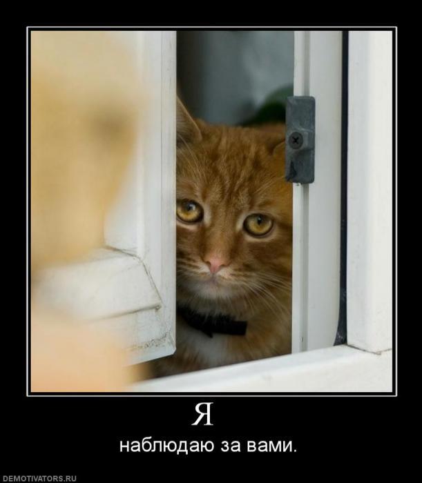 Весёлые демотиваторы с котами 28 фото