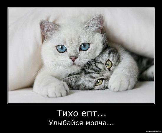 Весёлые демотиваторы с котами (28 фото): bygaga.com.ua/demotivators/demotivatory-s-zhivotnymi/10657-veselye...