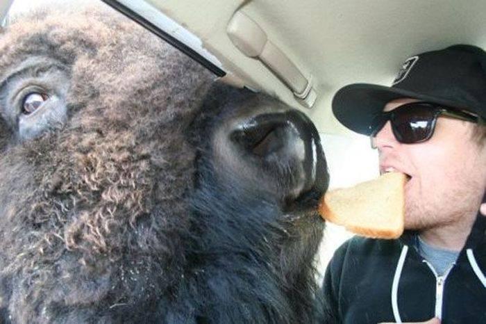 Фото с животными прикольные картинки