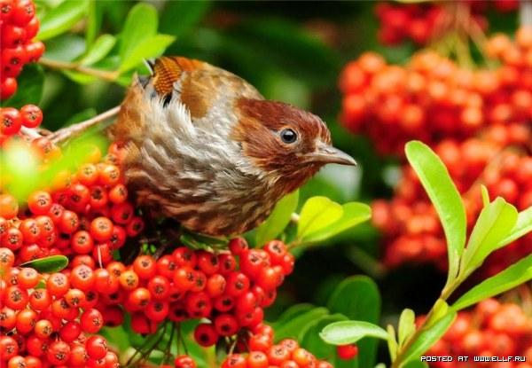 Райские птицы (29 фото)