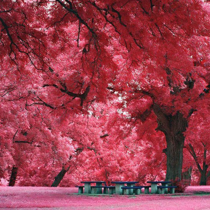 Красивые фотографии природы 40 фото