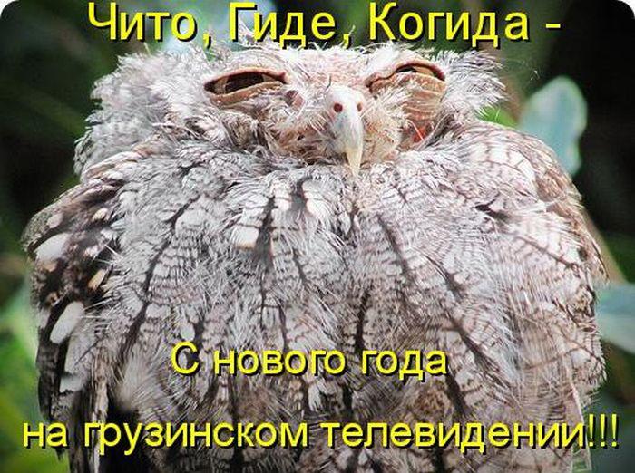 http://bygaga.com.ua/uploads/posts/1363369906_kotomatrivci_bygaga.com.ua_889-13.jpg