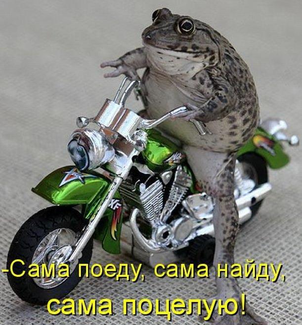 http://bygaga.com.ua/uploads/posts/1363369983_kotomatrivci_bygaga.com.ua_889-17.jpg