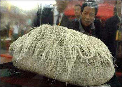 Волосатый камень (3 фото)