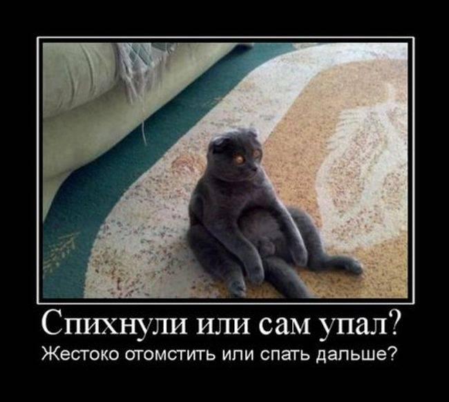 Я хочу, чтобы Вы улыбнулись. 1363809683_demotivatori_bygaga.com.ua-7