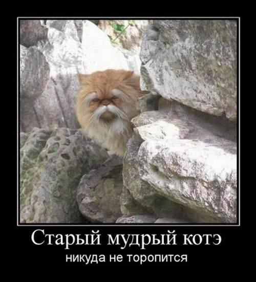 Я хочу, чтобы Вы улыбнулись. 1363809726_demotivatori_bygaga.com.ua-53