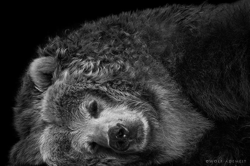 Черно белые фотографии животных 9