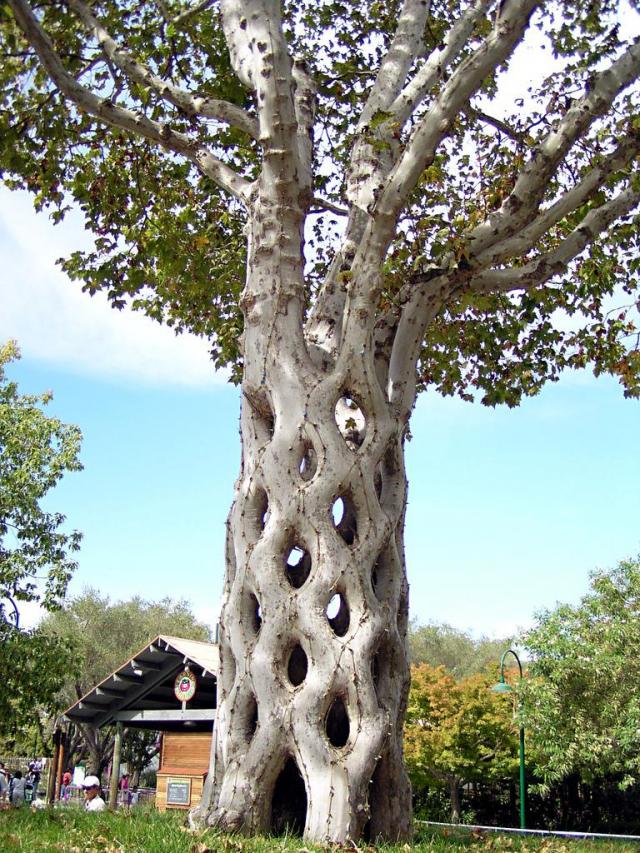 עצים מיוחדים
