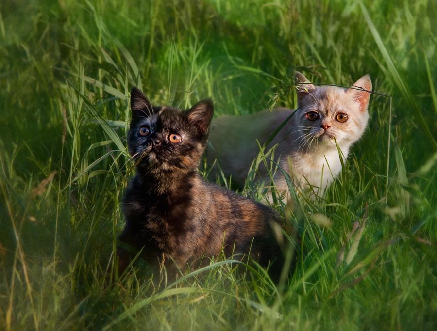 Фотки мишки 5