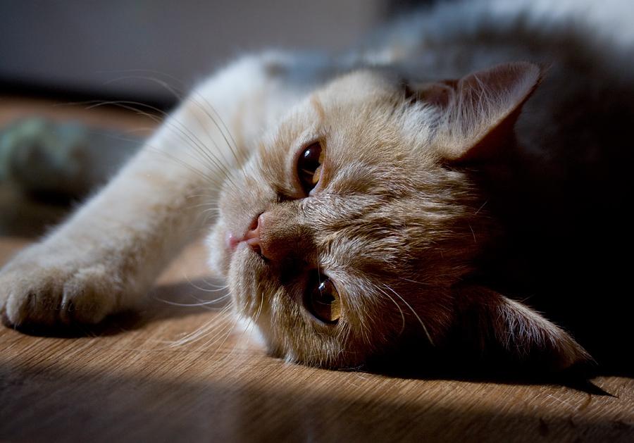 Картинки с маленькими котятами
