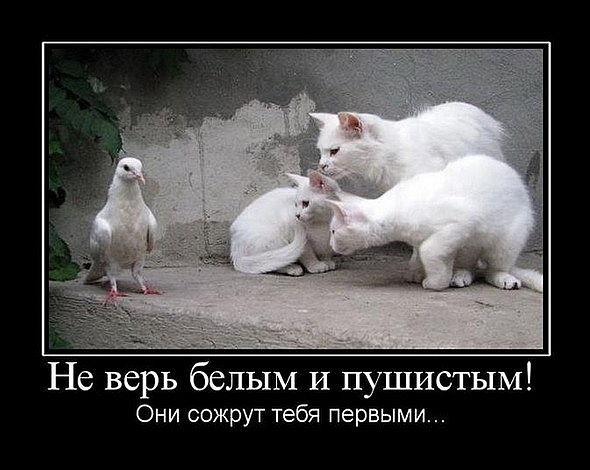 http://bygaga.com.ua/uploads/posts/1370938424_demotivatori_pro_jivotnih-73.jpg
